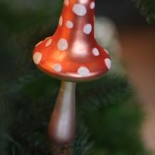 magic clip mushroom