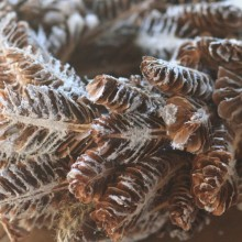 sliced pine cone wreath dusted in snow